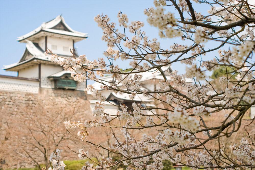 金沢城と桜の画像