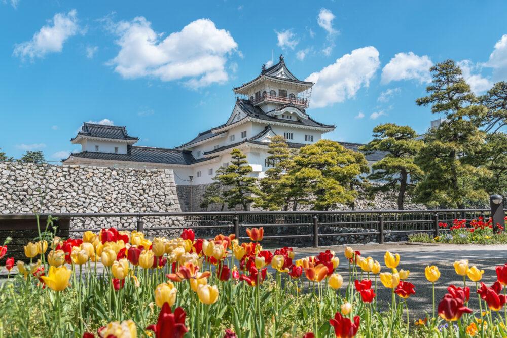 富山城とチューリップ