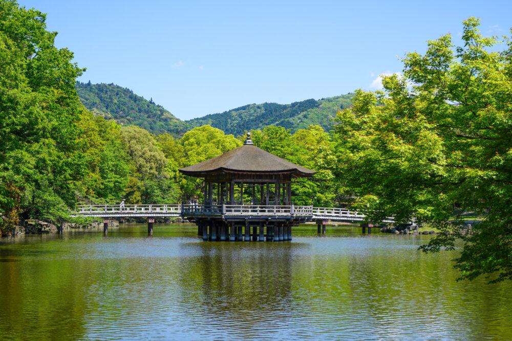奈良公園の新緑