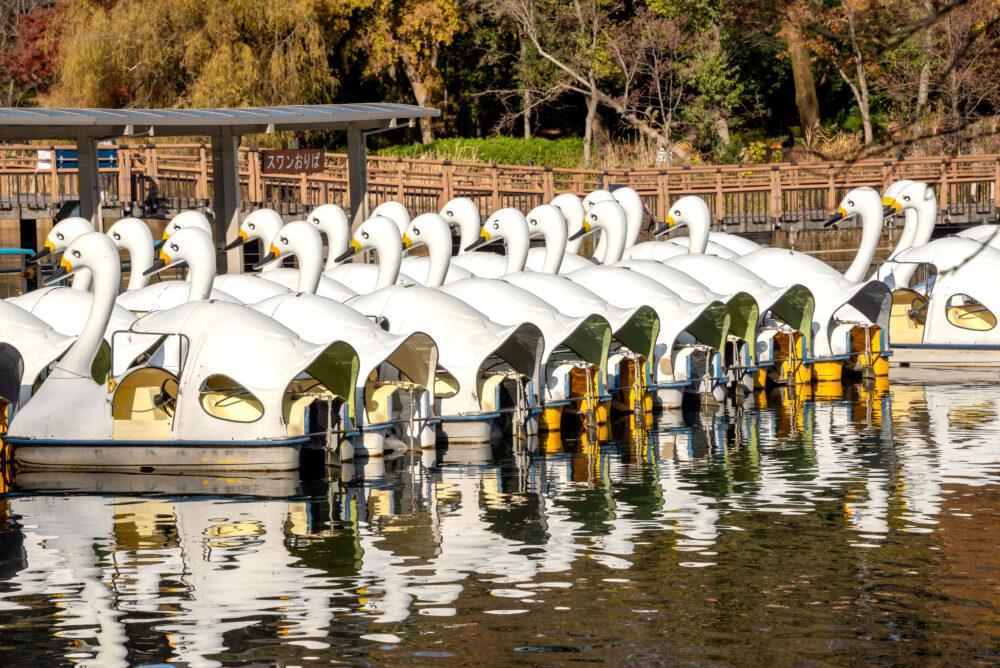 井の頭公園の池の白鳥ボート