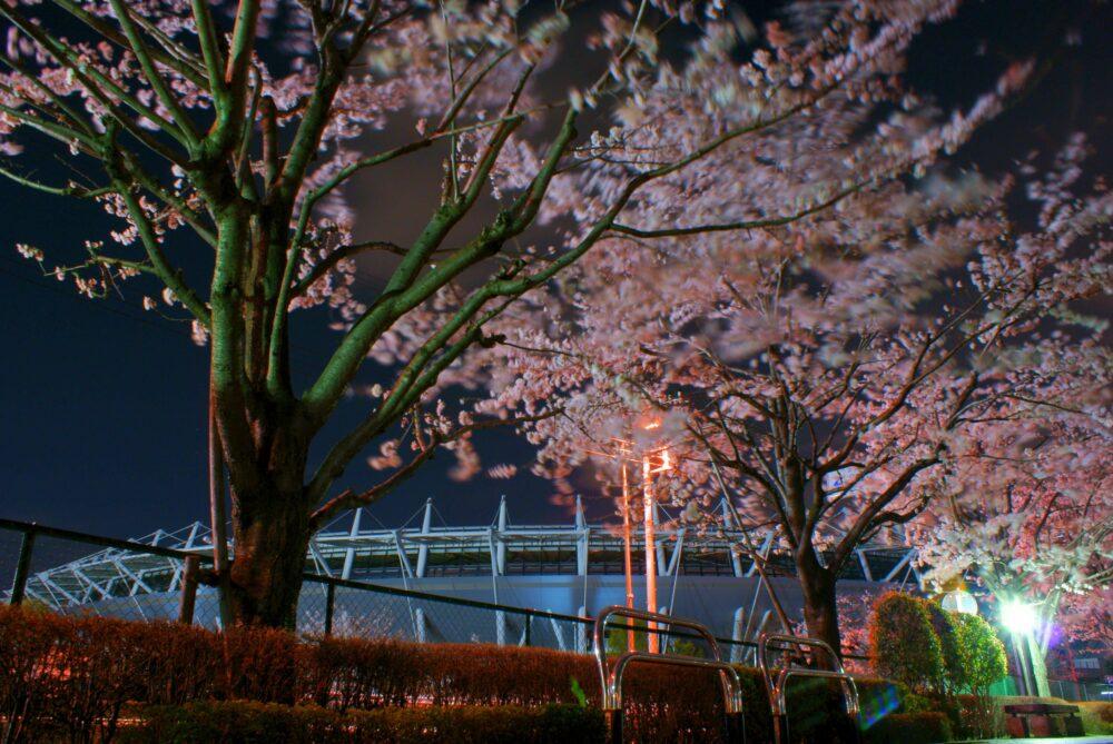 東京スタジアムの夜桜